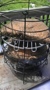 Brisket 2 in Basketb